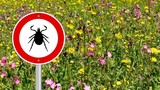 10 Things to Know About Lyme Disease