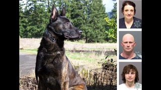 K-9 officer gets hat trick nabbing 3 suspects in 90 minutes