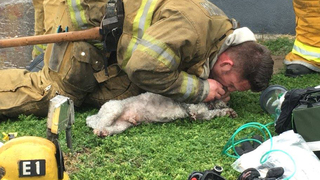 Dog pulled from California fire revived by firefighters after 20 minutes