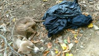 Policeman accused of abandoning emaciated dog in park