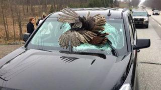 30-pound turkey slams through rental car