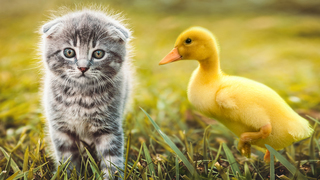 Must-see: Florida firefighters rescue kitten, ducklings in distress