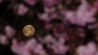 "What Is A ""Pink Moon?"""