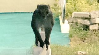 Missing monkey spotted again in Apopka, resident says