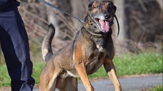 Police dog wins legal battle after burglary suspect sues over bite