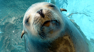 Girl Pulled Into Water By Sea Lion Treated For Rare Bacterial Disease