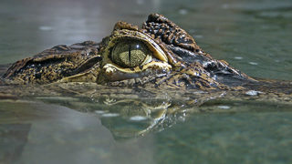 2 arrested for trying to force alligator to drink beer