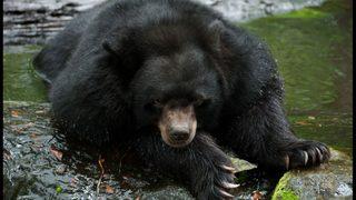 Bear wanders into Walmart parking lot in Kentucky