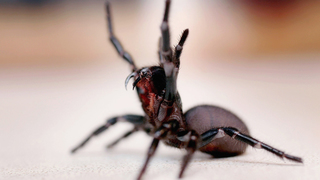 Propane torch used to kill spiders may have sparked mobile home fire