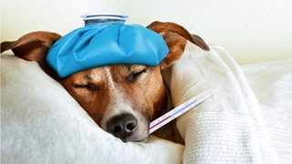 5 things to know about dog flu