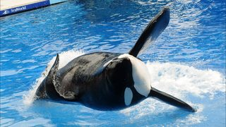 SeaWorld under investigation by 2 federal agencies