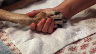 Man wakes from induced coma when his dog visits the hospital