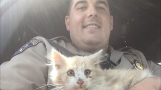 Kitten rescued after getting stuck on the Golden Gate Bridge