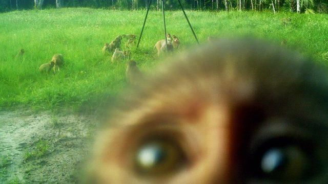 IMAGE(https://media-ncd.cmgdigital.com/photo/2017/07/08/monkey-RuStthlc2yrH52aHciIvt5M-680x383_8548604_ver1.0_640_360.jpg)