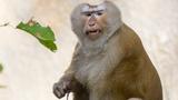 Wild Monkeys Attack Florida Family