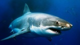 14 Astonishing Facts about Sharks