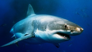 Shark attacks American woman spearfishing in Bahamas