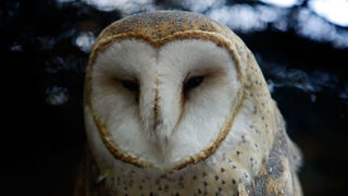 Owl in wheel of plane delays flight out of Portland airport