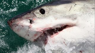 Fisherman hooks great white from California pier