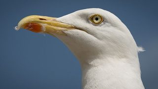 Troopers: Naked man arrested after chasing seagulls on beach