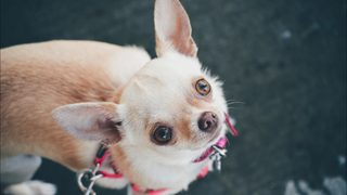 Dog dies after being left in car in nylon bag while owner cleaned condos