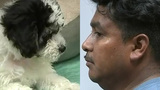 Man Faces Deportation After Leaving Puppy In Hot Car, Police Say