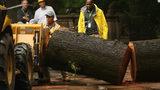 Mom breaks neck shielding 3 kids from falling tree in Central Park