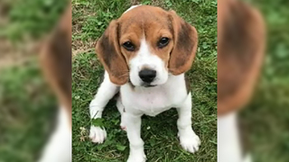 Dog Bought At Pet Store Dies 11 Days Later, Woman Denied Refund