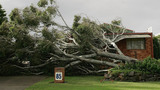 Who Pays for Cleanup if Your Neighbor's Tree Falls in Your Yard?