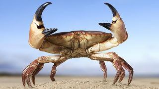 Watch:Surprised homeowners react when they spotcrab in flood damaged…