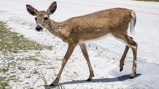 Firefighter hydrates distressed deer found in home after hurricane