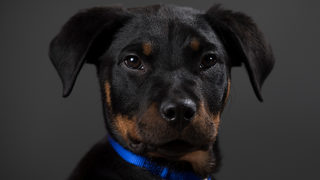 Pet store puppies linked to bacterial outbreak in 18 states, CDC says