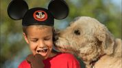 Beginning Sunday, Oct. 15, 2017, Walt Disney World Resort will welcome guests and their canine companions to four resort hotels.