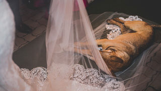Stray dog crashes wedding, gets new home