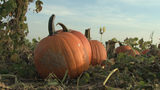 Woman Warning Others After Trip to Pumpkin Patch Leads to Painful Infection
