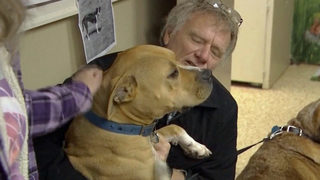Hank the pit bull, wrongly accused of killing livestock, set free