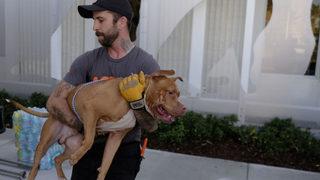 Massachusetts man arrested for dragging badly beaten dog