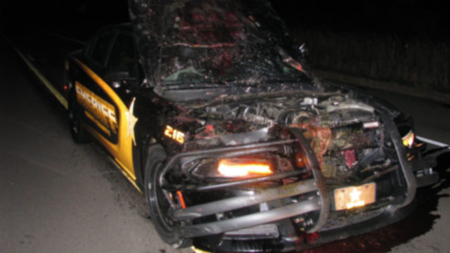 Dashcam Footage Shows Minnesota Deputy Hitting Deer At 114