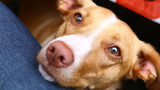 What Your Dog Is Really Trying To Tell You With Those Heart-Melting Eyes