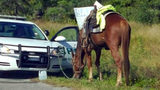 Florida Woman Riding Horse Charged With DUI