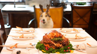 Thanksgiving and pets: How to keep your furry family members from…