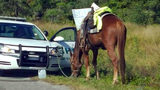 A woman on horseback was arrested and charged with dui and animal neglect.