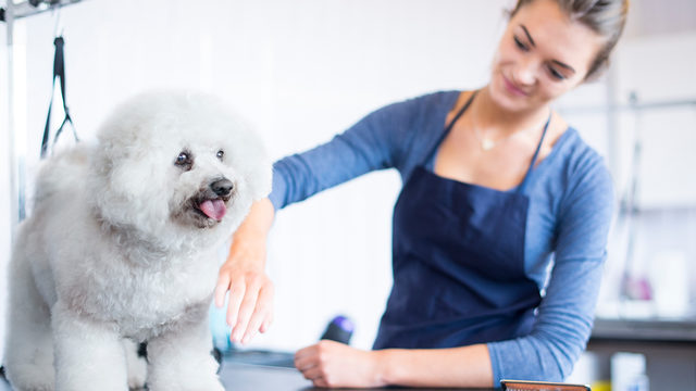 Petsmart Dog Grooming Charges