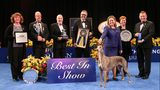 A Greyhound named Gia was the Best in Show Winner at the 2016 National Dog Show. (NBC/NBCU Photo Bank via Getty Images)