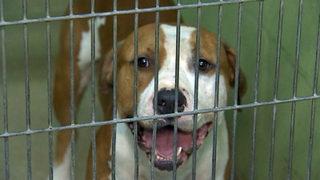 Orange County Animal Services: Pet adoptions, volunteer opportunities