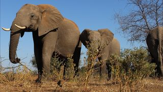 Trump delays lifting ban on import of elephant trophies from Africa