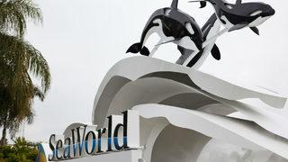 Orlando hotels near Sea World