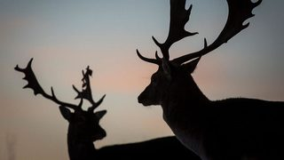 Man shot, killed in Indiana deer hunting accident