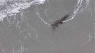 Crocodile spotted on Florida beach
