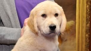 Puppies take stress out of holiday travel at Pa. airport